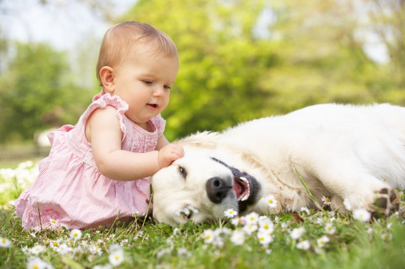 børn og dyr